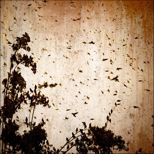 Eric Rigo. Flight Of The Birds