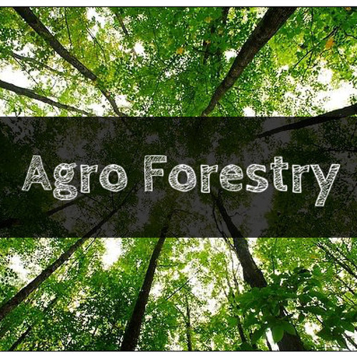 Permaculture and Forest Ecological Preservation