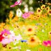 The Flower Song From Lakme String Quartet