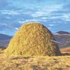 c! c! c! sings Elliott Smith - Needle In The Hay