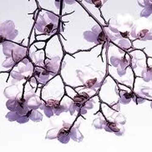 Magnolias ( Original Mix by Adriano)