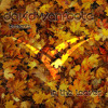 David Vanfoote - In The Leaves Mix