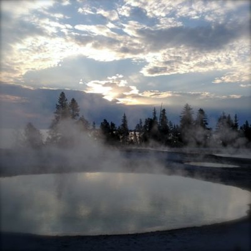 Yellowstone Nat'l Park - West Thumb Geyser Basin - mud pots + birds & bugs (No 274)