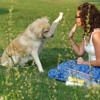 Dog Training Tips : Learn the Secrets to Train Your Dog Fast and Easy