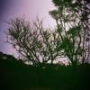 blue moon - elvis presley (ukulele cover)