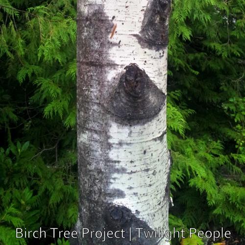 Birch Tree Project - Platitudes