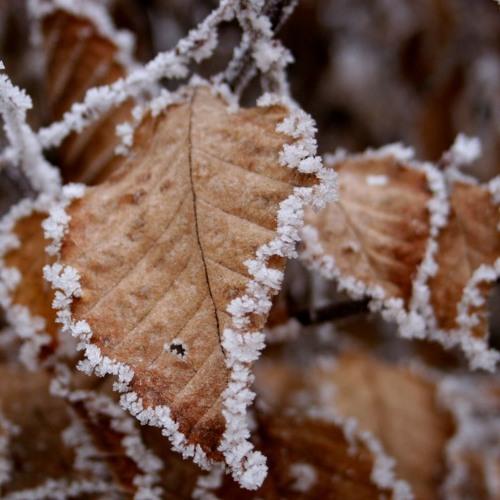Autumn's Last Days
