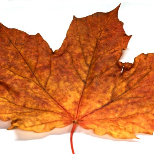 Autumnal Happiness (Oct 2013) Pt1