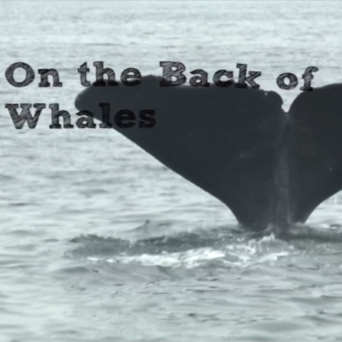 On The Back Of Whales