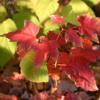 The whispering blaze of Autumn - Milana - on iTunes!