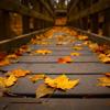 Chero- Autumn leaves piano
