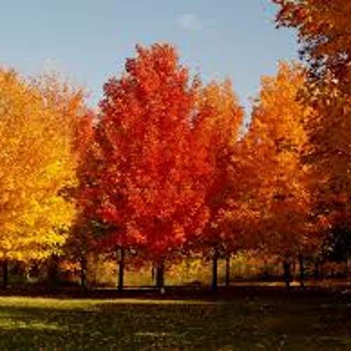 Northeast Fall