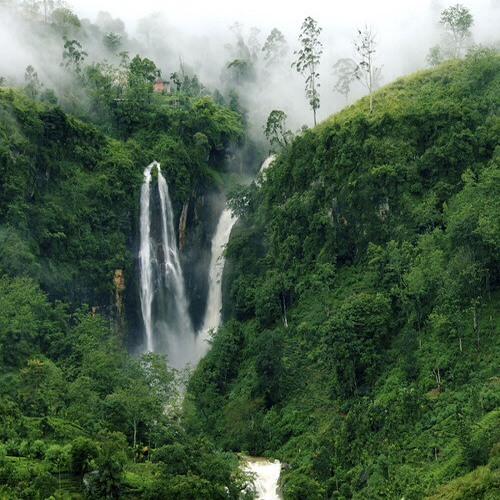 Breath Of Jungles