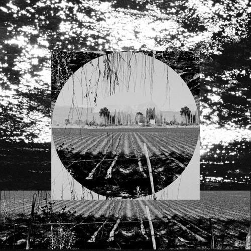 Steady Sun - Garden Path Song