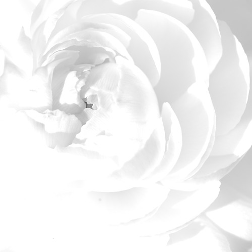 White (261/365)