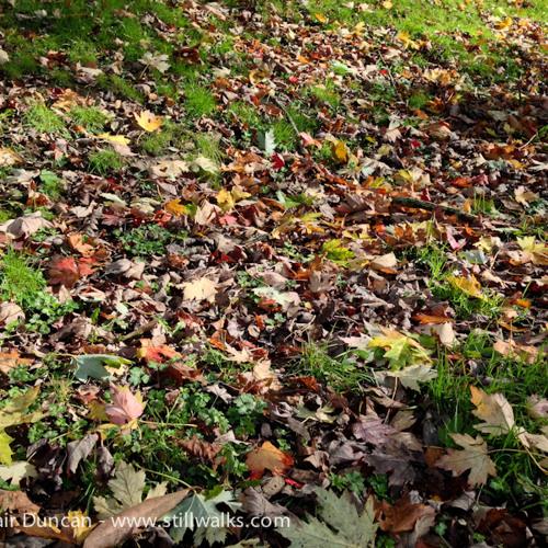 Cwmdonkin Leaf Blower 1
