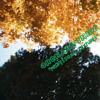 Orchard Thief - Stasis In Green