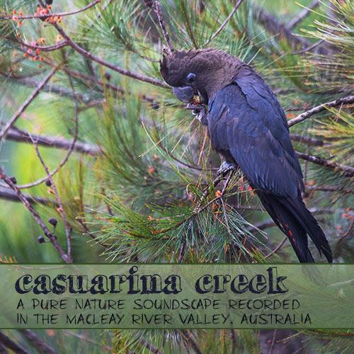 Casuarina Creek - Nature Soundscape Album from NSW, Australia