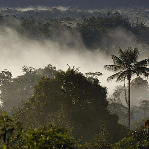 Global Activism: Saving Guatemala's forests