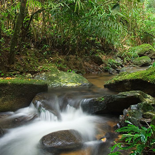 Relax by a Mountain Stream - Bukit Fraser, Malaysia