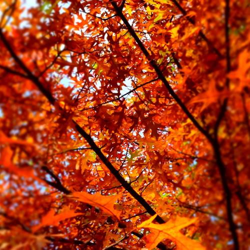 Autumn -پاییز