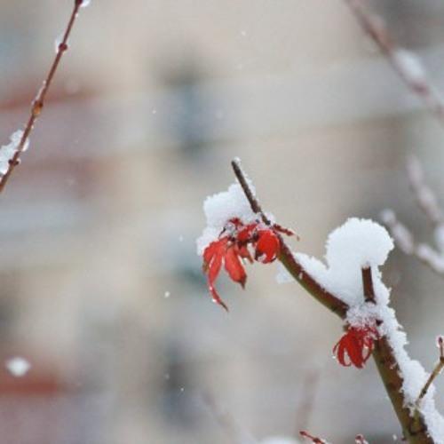 雪の踊り子 (Snow Dancer)