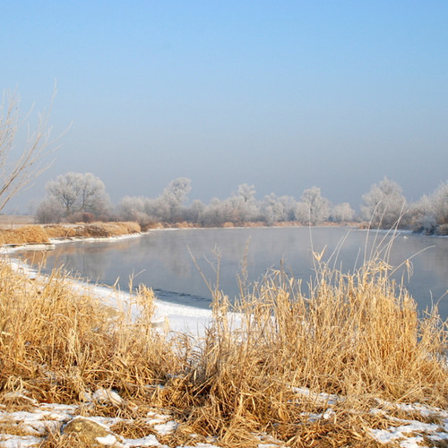 Winter on the banks of the Warta River - 02 - Swans