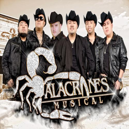 ALACRANES MUSICAL Yo No Debi Amarte