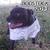 Sam Hermelin Live @ Bodstock 2013