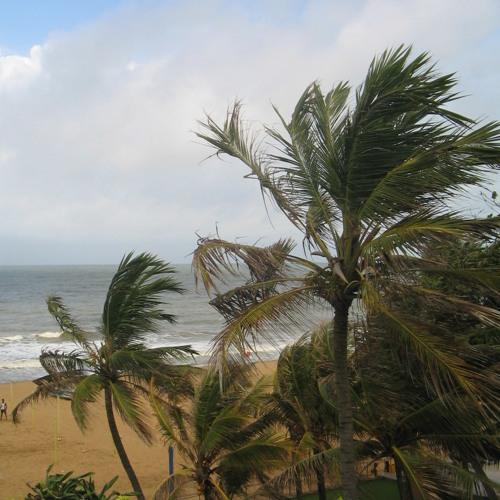 Boys Beach - Tropical Wisdom