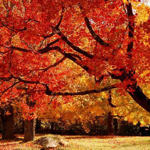 Fall Mix 2013