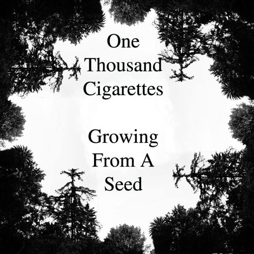 One Thousand Cigarettes - Growing From A Seed