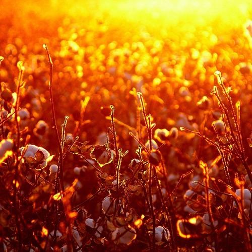Summertime (George Gershwin cover by Alyssa Du Gard)