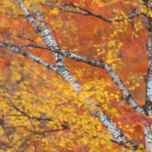 Ambiances Sonores D'automne (p1)