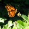 Light Just Like a Butterfly
