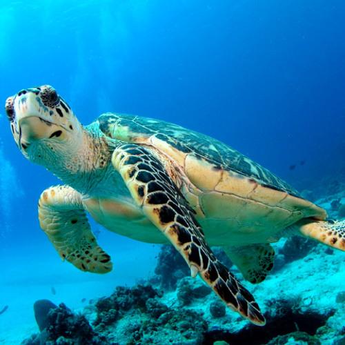 Moombah Jokes- Teresa's Turtle
