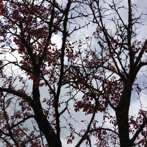 Autumn Of Nara