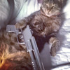 SlimSimba - Cats that goes rampage mp3