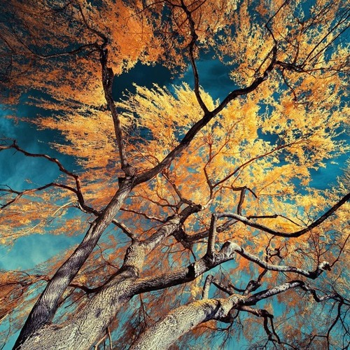 QuiQui - Yellow Leaves [Univack Records]