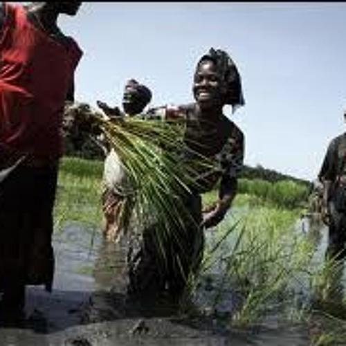 Ecouter Yamoussa Fofana le directeur des statistiques agricoles et alimentaires de Guinée