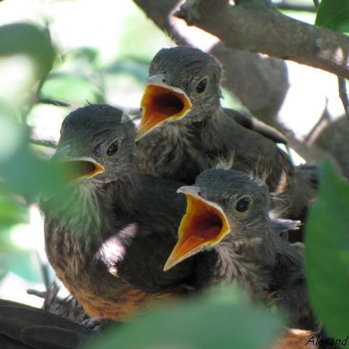 7 Aves [165 BPMs]