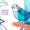Birds - New York City Paris