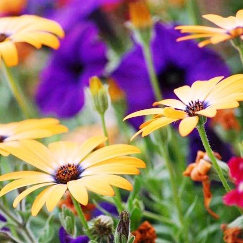jardines ocultos