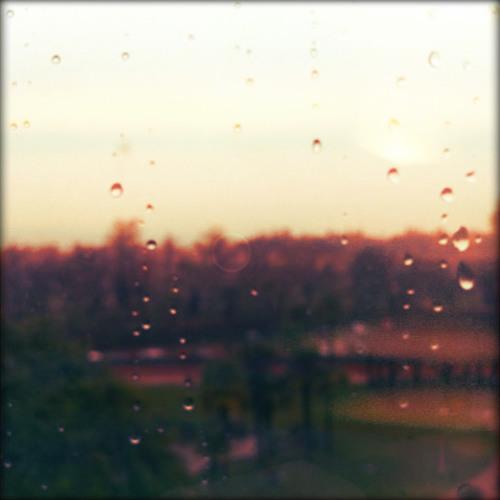 Pioggia nella legnaia