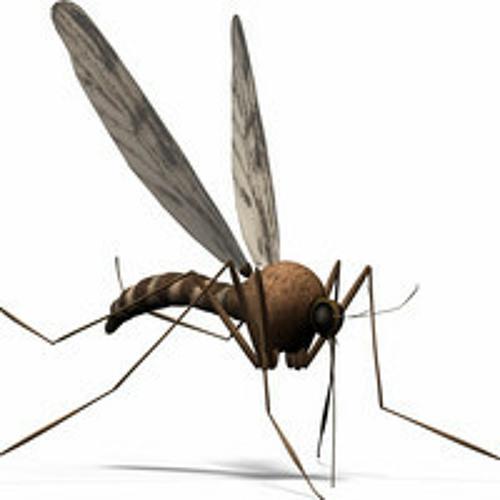 Perfect stranger - A mosquito bit my leg (Avishay Lahav Remix)