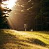 Catching Flies – Sunrays