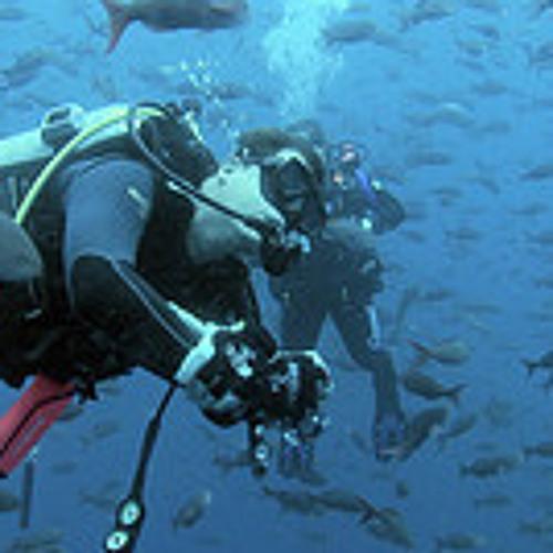 San Francisco International Ocean Film Festival Trailer Score - 2014