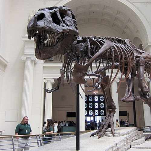 Scientists at Chicago's Field Museum discover a new dinosaur