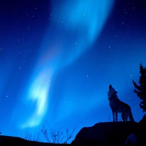 Aurora Borealis (Ovnimoon Rec)