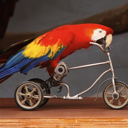 Tessela - Hackney Parrot (Sam Binga's Crackney Parrot Rebax)